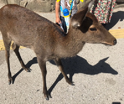 鹿.png